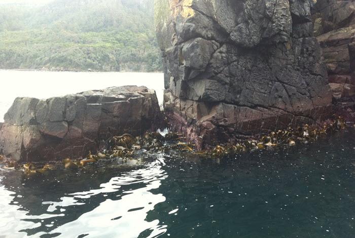 Fascination with Kelp / Seaweed